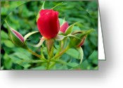 Sentiments Greeting Cards - Sphered Red Roses Greeting Card by Cindy Wright