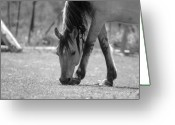 Wild Horses Greeting Cards - Spice Greeting Card by Emily Stauring