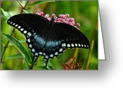 Spicebush Swallowtail Greeting Cards - Spicebush Swallowtail DIN038 Greeting Card by Gerry Gantt
