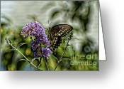 Spicebush Greeting Cards - Spicebush Swallowtail  Greeting Card by Edward Sobuta