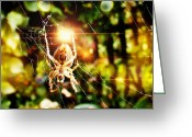 Tofu Greeting Cards - Spider bokeh Greeting Card by Yvon -aka- Yanieck  Mariani