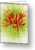 Morning Mist Images Greeting Cards - Spider Lily Greeting Card by Judi Bagwell