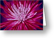 Hyper-realism Painting Greeting Cards - Spider Mum Greeting Card by Tony Chimento