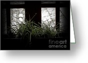 Backlit Greeting Cards - Spider Plant In Shadow Greeting Card by Al Bourassa