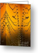 Rait Greeting Cards - Spider web reflections Greeting Card by Odon Czintos