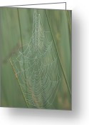 Baraboo Greeting Cards - Spiderwebs Laden With Dew On A Foggy Greeting Card by Joel Sartore
