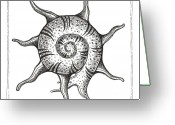 Swirls Drawings Greeting Cards - Spiney Nautilus Greeting Card by Stephanie Troxell