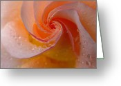 Red Roses Greeting Cards - Spiral Rose Greeting Card by Juergen Roth