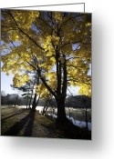 Leaves Photographs Greeting Cards - Spirit by the Lake Greeting Card by Rob Travis