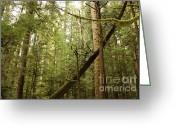 Forest Floor Photo Greeting Cards - Spirit of the Pacific Northwest Greeting Card by Carol Groenen