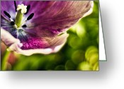 Fine Art Flower Photography Greeting Cards - Splash Greeting Card by Jason Naudi Photography