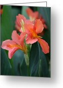 Canna Greeting Cards - Splash of Orange Greeting Card by Paul Slebodnick