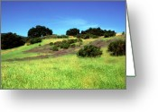 Featured Artwork Prints Greeting Cards - Splendor in the Grass Greeting Card by Kathy Yates