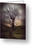 Brushes Digital Art Greeting Cards - Spook-Tree Greeting Card by Svetlana Sewell