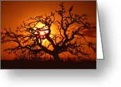 Old Tree Greeting Cards - Spooky Tree Greeting Card by Stephen Anderson