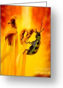 Antenna Greeting Cards - Spotted Cucumber Beetle Greeting Card by Carl Jackson