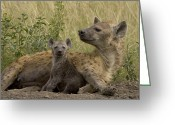 African Animals Greeting Cards - Spotted Hyena Mother With Young Masai Greeting Card by Suzi Eszterhas