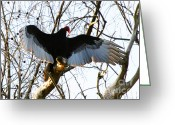Buzzard Wings Greeting Cards - Spread Your Wings Greeting Card by Tap On Photo