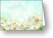 White Flower Greeting Cards - Spring Background with daisies Greeting Card by Sandra Cunningham