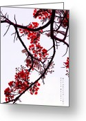 Exotic Tree Flowers Greeting Cards - Spring Bloosom in Maldives. Flamboyant Tree Greeting Card by Jenny Rainbow