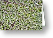 Bradford Greeting Cards - Spring Blossoms Greeting Card by Lana Trussell