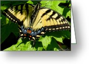 Designer Butterfly Works Photo Greeting Cards - Spring Butterfly Greeting Card by Debra     Vatalaro