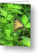 Swallow Tail Butterfly Greeting Cards - Spring Butterfly Greeting Card by Robert Pearson