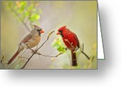 Red Birds Greeting Cards - Spring Cardinals Greeting Card by Bonnie Barry