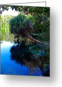 Cabbage Palm Trees Greeting Cards - Spring Creek Blues Greeting Card by Christy Usilton
