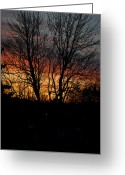 Frederico Borges Greeting Cards - Spring Dawn Greeting Card by Frederico Borges