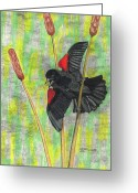Red Wing Blackbird Greeting Cards - Spring Fever Greeting Card by Don  Gallacher