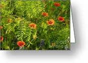 Flower Greeting Card Greeting Cards - Spring Filter Greeting Card by Joe JAKE Pratt