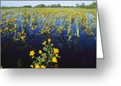 Spring Floods Greeting Cards - Spring Flood Plains With Wildflowers Greeting Card by Norbert Rosing