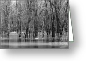 Flooding Photo Greeting Cards - Spring Flooding Greeting Card by Sophie Vigneault