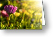 Pollen Greeting Cards - Spring Flower Greeting Card by Carlos Caetano