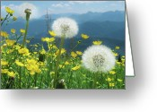 Buttercup Greeting Cards - Spring Flower Meadow With Mountain Greeting Card by Fresh, amazing pictures make people look!