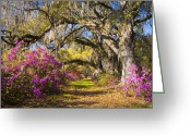 Lowland Greeting Cards - Spring Flowers Charleston SC Azalea Blooms Deep South Landscape Photography Greeting Card by Dave Allen