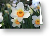 City Garden Greeting Cards - Spring fresh Greeting Card by Pierre Leclerc