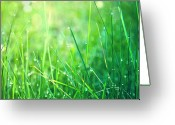 Dew Greeting Cards - Spring Green Grass Greeting Card by Dirk Wüstenhagen Imagery