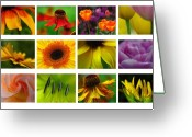 Lily Greeting Cards - Spring Greetings Greeting Card by Juergen Roth