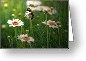 Fragility Greeting Cards - Spring In Air. Greeting Card by Photos by Shmelly