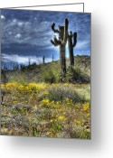 Saguaro Cactus Greeting Cards - Spring in the Desert  Greeting Card by Saija  Lehtonen