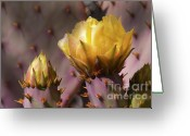 Rita Greeting Cards - Spring in the Desert Greeting Card by Sandra Bronstein