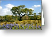 Blue Bonnets Greeting Cards - Spring in the vineyard Greeting Card by Kurt Van Wagner