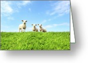 Three Animals Greeting Cards - Spring Lambs Greeting Card by MarcelTB
