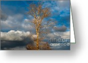 Calendar Greeting Cards - Spring Light in Autumnal Day Greeting Card by Jenny Rainbow
