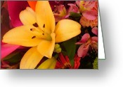 Daisy Greeting Cards - Spring Lily Bouquet Greeting Card by Amy Vangsgard
