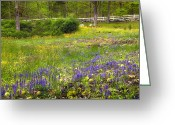 Purple Flower Greeting Cards - Spring Meadow Greeting Card by Bill  Wakeley