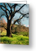 Landscapes Framed Prints Greeting Cards - Spring Oak Greeting Card by Kathy Yates