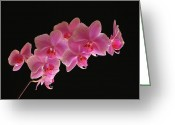 Rare Photography Greeting Cards - Spring Orchids Greeting Card by Juergen Roth